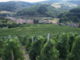 Beaujolais Vineyards, Beaujeau Village, Rhone Valley, France Photographic Print by David Hughes