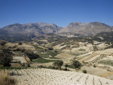Agricultural Valley and Mountains, Heraklion, Crete, Greece Fotografisk tryk af James Green