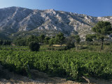 Vineyards and Montagne Ste. Victoire, Near Aix-En-Provence, Bouches-Du-Rhone, Provence, France Photographic Print by David Hughes