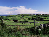 Cattle in Field, Santa Mera, Near Villaviciosa, Costa Verde, Asturias, Spain Photographic Print by David Hughes