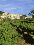 Vines in Vineyard, Village of Bonnieux, the Luberon, Vaucluse, Provence, France Photographic Print by David Hughes