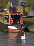 Swan and Narrowboat Near the British Waterways Board Workshops, Tardebigge, England Photographic Print by David Hughes
