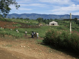 People Leaving Church on a Sunday, Fort Portal, Uganda, East Africa, Africa Photographic Print by David Poole