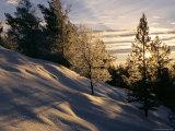 Sun Through Trees, Rondablikk, Norway, Scandinavia Photographic Print by David Poole