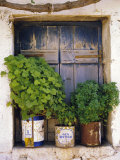 Windowsill, Paleohora, Crete, Greece Photographic Print by Peter Ryan