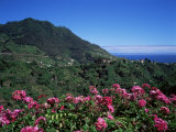 Landscape Near Sao Roque Do Faial, Island of Madeira, Portugal, Atlantic Photographic Print by Hans Peter Merten