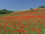 Poppy Field Near Montechiello, Tuscany, Italy Fotografisk tryk af Lee Frost