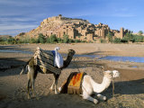 Camels by Riverbank with Kasbah Ait Benhaddou, Unesco World Heritage Site, in Background, Morocco Photographic Print by Lee Frost
