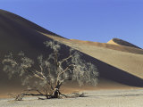 Tree and Sand Dune Near Sesriem, Namib Naukluft Park, Namibia, Africa Photographic Print by Lee Frost