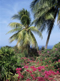 Andromeda Gardens, Near Bathsheba, Barbados, West Indies, Caribbean, Central America Photographic Print by Hans Peter Merten