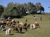 Children Tending Goats Near Sankaber, Simien Mountain National Park, Ethiopia, Africa Photographic Print by David Poole