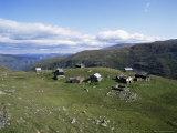 Landscape in Aurlandsdalen, Sogn Og Fjordane, Norway, Scandinavia Photographic Print by Hans Peter Merten
