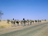 Camel Train Approaching Agades, Niger, Africa Photographic Print by Jack Jackson