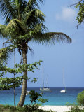 Yachts and Palms, Barbados, West Indies, Caribbean, Central America Photographie par J Lightfoot