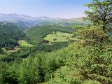 Coed Y Brennin Forest, Near Dolgellau, Snowdonia National Park, Gwynedd, Wales Photographic Print by Duncan Maxwell