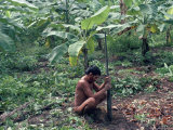 Yanomami Man Using Traditional Digging Stick, Brazil, South America Photographic Print by Robin Hanbury-tenison