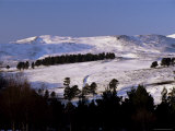 Pines on Winter Hillside, Cairngorm Mountains, Deeside, Highland Region, Scotland Photographic Print by Lousie Murray