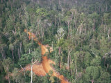Logging Road Through Rainforest, Brazil, South America Photographic Print by Robin Hanbury-tenison