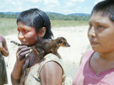 Gorotire Indian Girl with Pet Coati, Xingu, Brazil, South America Photographic Print by Robin Hanbury-tenison