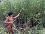 Yanomami Indian Collecting Reed for Arrows, Brazil, South America Photographic Print by Robin Hanbury-tenison
