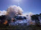 Bush Fire, St. Francis, Eastern Cape, South Africa, Africa Photographic Print by Lousie Murray