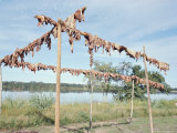 Wild Boar Meat Hanging to Dry, Diararum Xingu National Park, Brazil, South America Photographic Print by Robin Hanbury-tenison