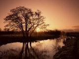Sunrise Over the River Wey, Send, Surrey, England, United Kingdom Fotografisk tryk af Roy Rainford