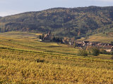 Vineyards, Hunawihr, Alsace, France Photographic Print by John Miller