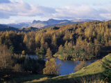 Tarn Hows, Lake District National Park, Cumbria, England, United Kingdom Fotoprint van Roy Rainford