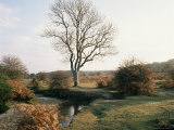 New Forest, Hampshire, England, United Kingdom Photographic Print by Roy Rainford