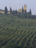 Landscape, Tuscany, Italy Photographic Print by Roy Rainford