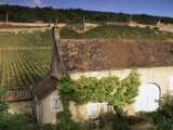 Old House and Vineyards, Bourgogne (Burgundy), France Photographic Print by John Miller