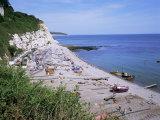 Beach and Cliffs, Beer, Devon, England, United Kingdom Stampa fotografica di Roy Rainford
