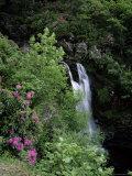 Inversnaid Waterfall, Loch Lomond, Stirling, Central Region, Scotland, United Kingdom Fotografisk tryk af Roy Rainford