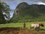 Peasant Farmer Ploughing Field with His Two Oxen, Vinales, Pinar Del Rio Province, Cuba Photographic Print by Eitan Simanor