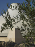 Close up of the Shrine of the Book, with Olive Tree Branches, Israel Museum, Jerusalem, Israel Photographic Print by Eitan Simanor