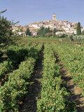 Vineyard, Cote Du Rhone, Sablet, Vaucluse, Provence, France Photographic Print by John Miller