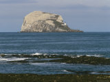 Bass Rock Gannetry, from the North Berwick Shore, East Lothian, Scotland, United Kingdom Photographic Print by Roy Rainford