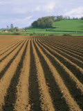 Ridged Soil in Ploughed Field, Somerset, England, United Kingdom Photographic Print by Roy Rainford