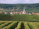 Chamery, Montagne De Reims, Champagne, France Photographic Print by John Miller