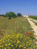 Wild Flowers Near Tavira, Algarve, Portugal Photographic Print by John Miller