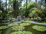 Jardin Majorelle, Marrakech (Marrakesh), Morocco, North Africa, Africa Photographic Print by Simon Harris