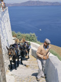 Animal Transport, Santorini (Thira), Cyclades Islands, Greek Islands, Greece Photographic Print by Michael Short