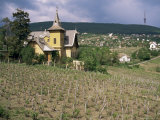 Vineyard (Grapes for Mainly Red Wine), in Mecsek Hills South of Pecs, Hungary Photographic Print by Michael Short