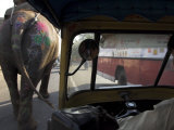 Elephant and Bus on the Road Seen from a Motor Rickshaw, Jaipur, Rajasthan State, India Photographic Print by Eitan Simanor