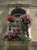 Floral Balconies, Rovinj, Croatia Photographic Print by Michael Short