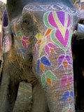 Decorated Elephant at the Amber Fort, Jaipur, Rajasthan State, India Photographic Print by Bruno Morandi