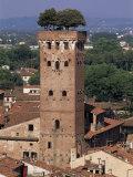 Tour Des Guinigi, Lucca, Tuscany, Italy Photographic Print by Bruno Morandi
