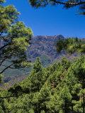 Pine Trees Near El Mirador De La Cumbrecita, La Palma, Spain Photographic Print by Marco Simoni