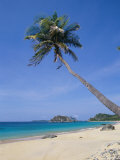 Palm Tree at Praia Do Conceicao Beach, Fernando De Noronha, Brazil Photographic Print by Marco Simoni